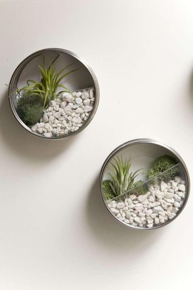 43. Vasos pequenos com plantas aéreas – Foto Ruffled