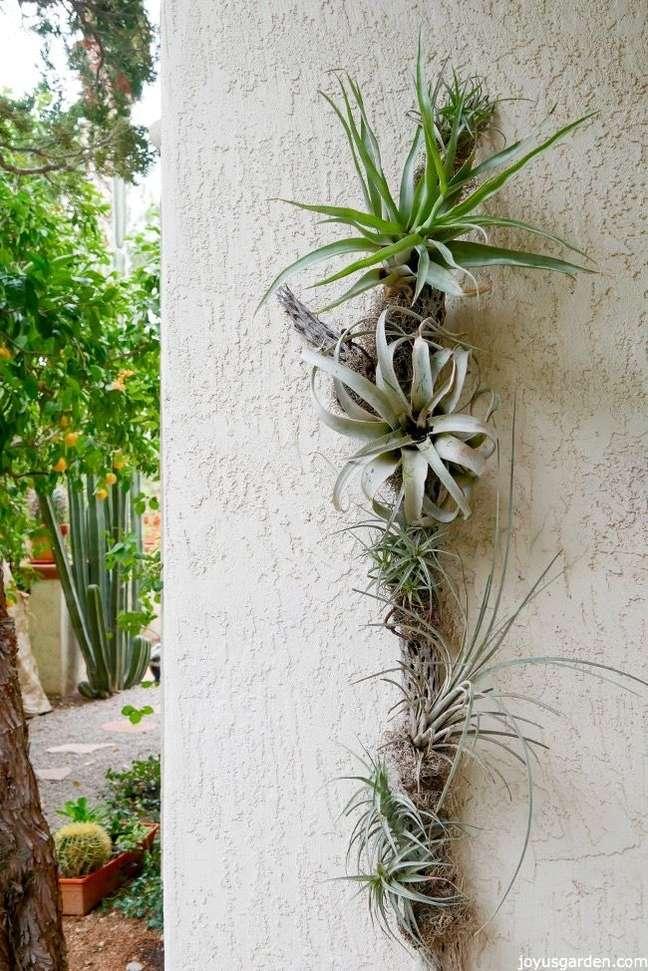 24. Plantas áreas que gostam de sol – Foto Joyus Garden