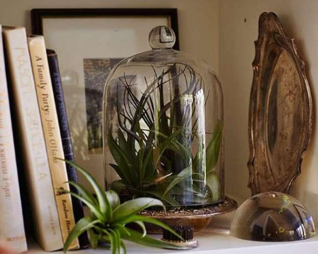 11. Decoração com plantas aéreas no pote de vidro para estante moderna -Foto Gardenista