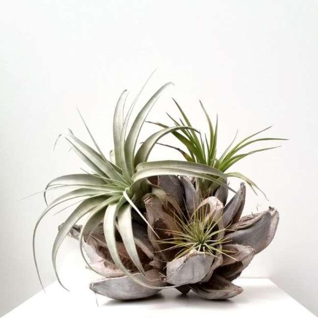 19. Plantas aéreas com vaso criativo para decoração de casas modernas Foto Ikebanaart