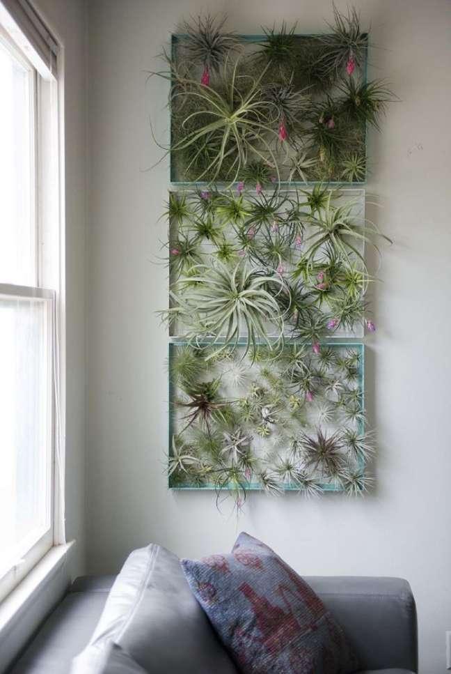14. Jardim vertical com plantas aéreas na sala de estar – Foto Airplantman