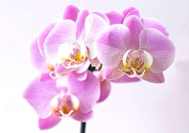 5. Flor orquidea pra decorar a casa com plantas aéreas – Foto Petra Kessler CASACOR