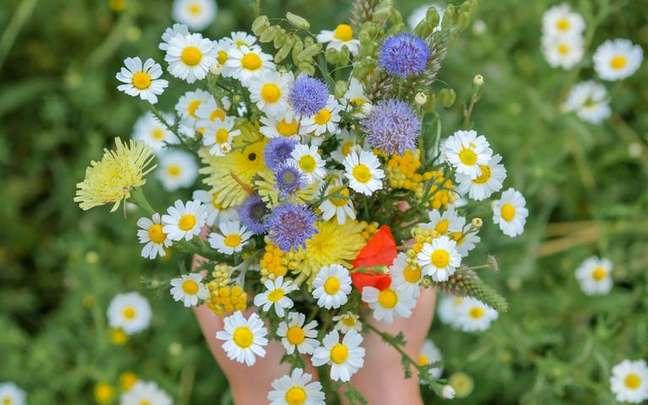 As flores são elementos que fortalecem os signos - Shutterstock.