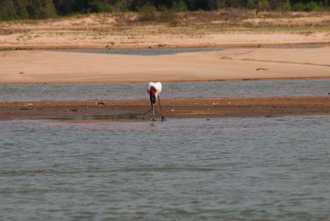 Em meio às queimadas no Pantanal, Rio Paraguai enfrenta seca