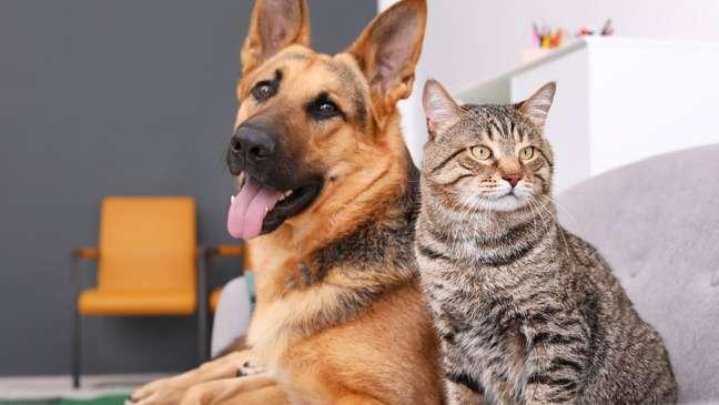 Saiba como prevenir a raiva em cães e gatos