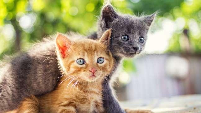 Como seria o gato de cada signo?