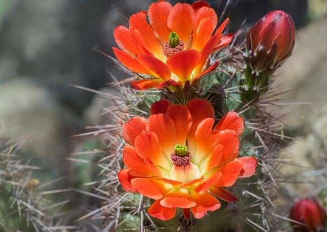 Veja qual flor tem mais a ver com você e saiba quais são seus pontos forte - Shutterstock.