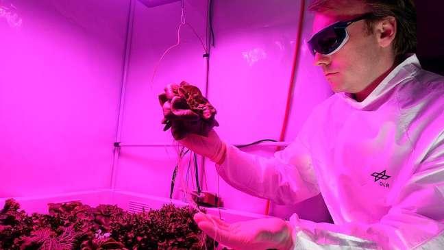 Enquanto a Nasa já achou uma boa candidata para cultivo no espaço, a Agência Espacial Europeia também está realizando experimentos com folhas