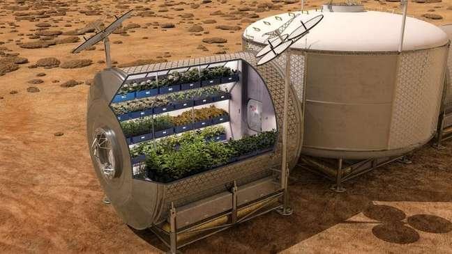 Há projetos de cultivo de plantas em estufas no solo marciano em estudo