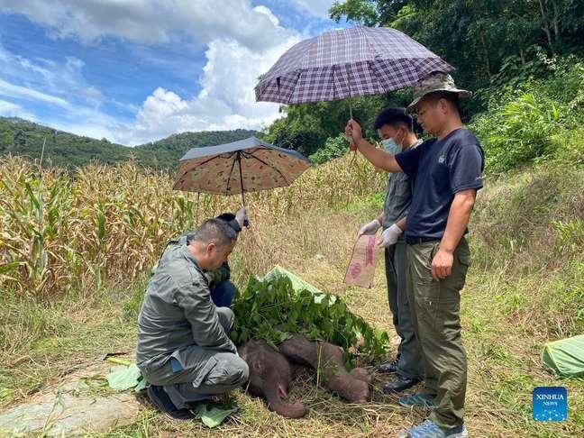 Os esforços de conservação em Yunnan fizeram a população de elefantes dobrar na última década