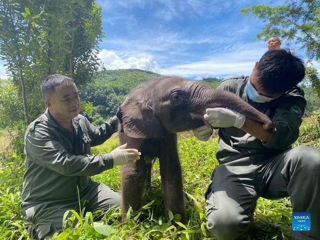 Filhote de elefante é resgatado depois de se separar de manada