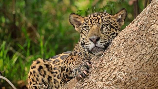 Os animais estão sob ameaça em diversos países da América Latina