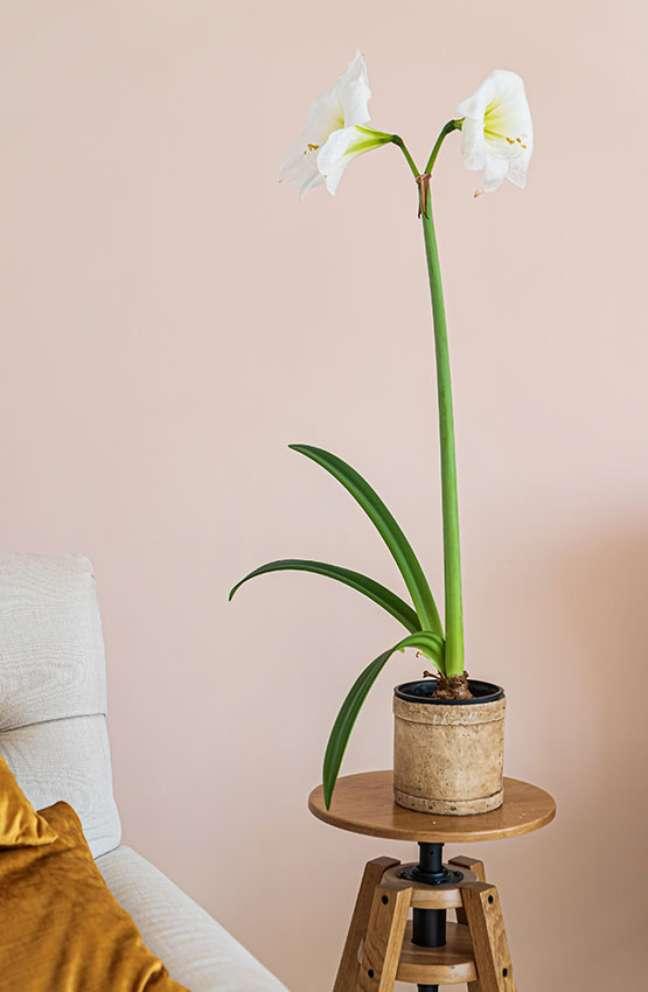 6. Quarto decorado com vaso de amarylis branca – Foto Adobe Stock