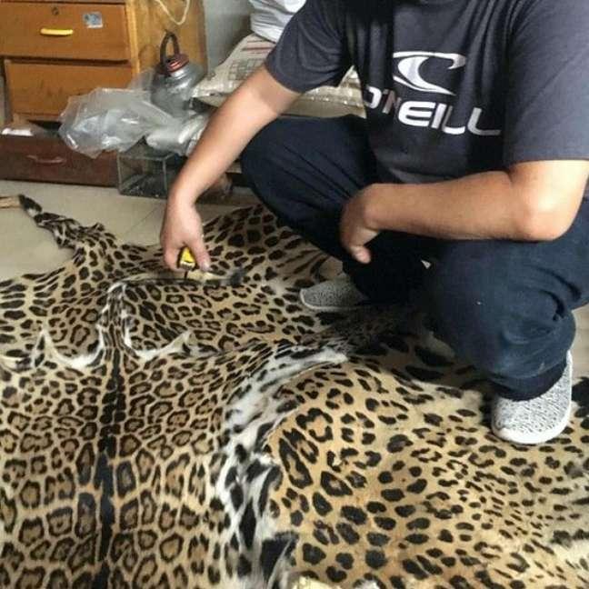 Os traficantes também vendem a pele do animal