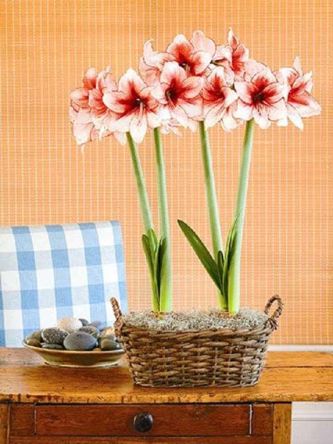 21. Decoração com vaso de amarílis rosa e branco – Foto Better Homes and Gardens