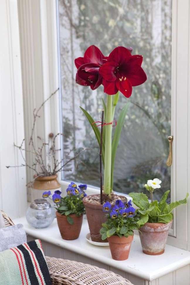 13. Vaso de flor vermelha na janela de casa – Foto Garderners World