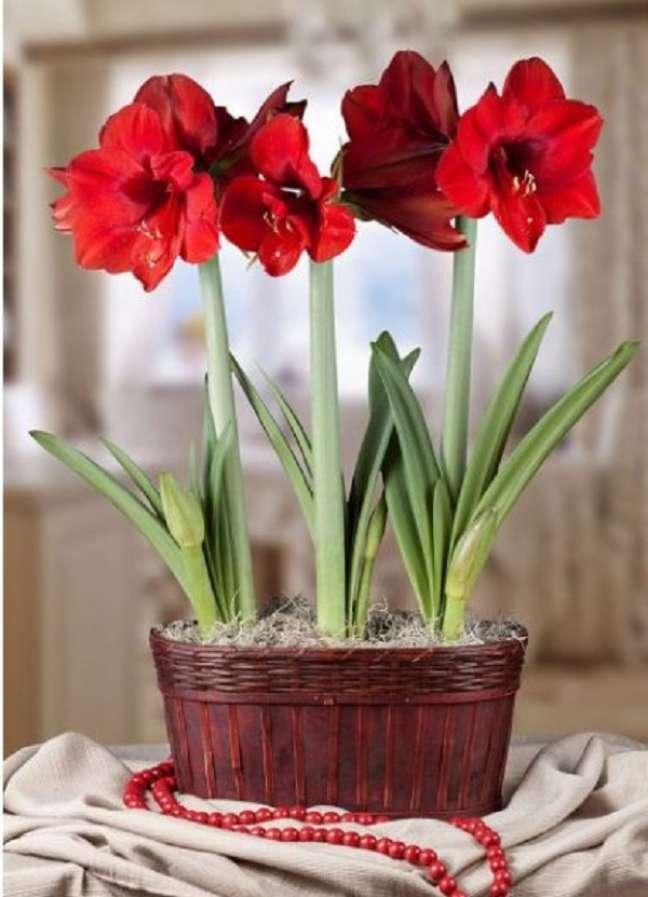 11. Vaso com flores de amarilis vermelhas – Foto So Flor Jardim