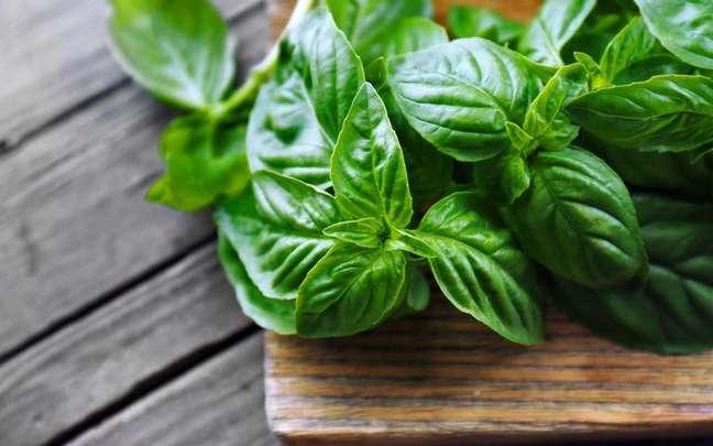 Conheça mais utilidades desta erva que vão muito além do uso na culinária - Shutterstock.