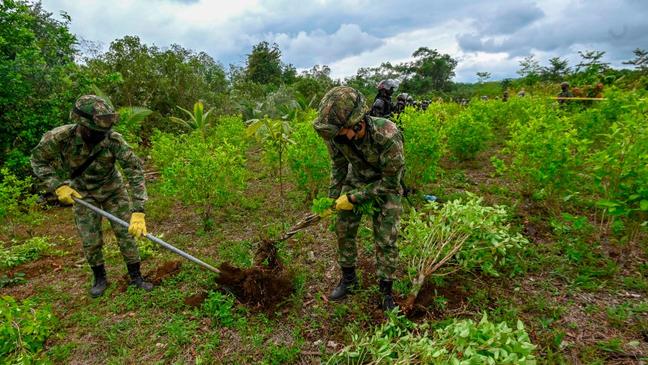 A erradicação forçada da coca é uma das apostas do presidente da Colômbia, Iván Duque