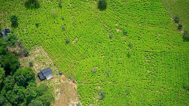Na Colômbia de hoje, há menos espaço com o plantio de coca. Mas o setor é o mesmo ou até maior do que antes
