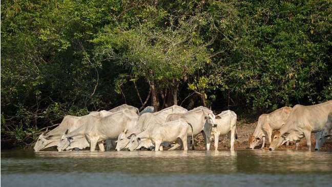 'Sem água não há possibilidade de se ter qualquer tipo de produção de proteína animal ou vegetal', diz Gherman Araujo, da Embrapa