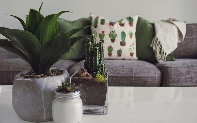 Confira quais são as melhores plantas da sorte para dar de presentes - Foto Pexels