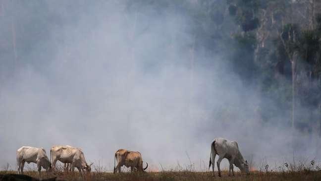 Emissão de gases do efeito estufa aqueceram o planeta; Brasil também sentiu e sentirá consequências