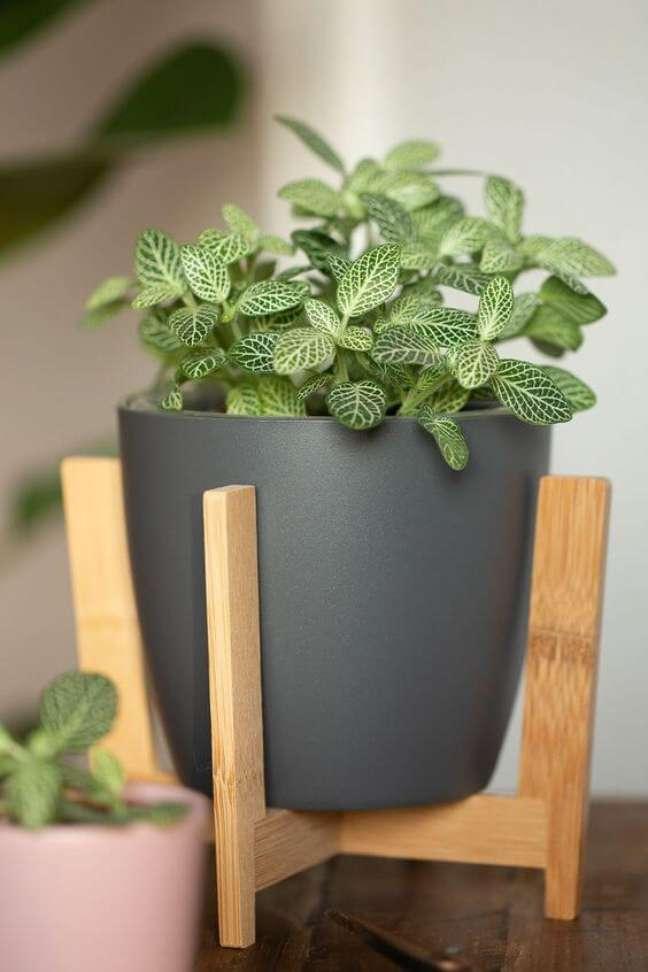 8. Fitônia com vaso cinza na decoração de sala de estar moderna – Foto Wiebkeliebt