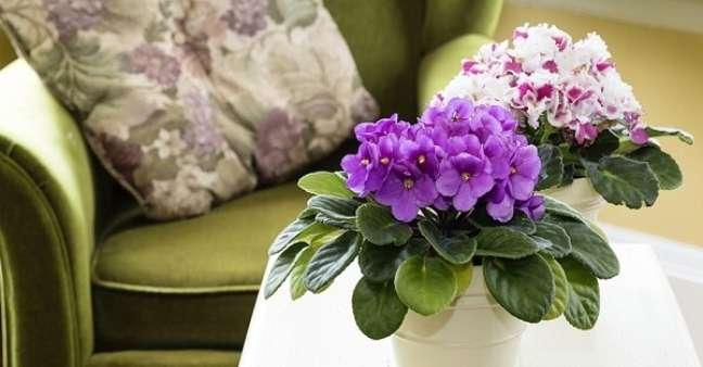 5. Vaso de flor violeta na sala de estar verde – Foto Cultura Mix