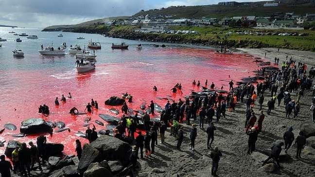 Caça de baleias, como a desta foto em Torshavn em 2019, é organizada pela própria comunidade