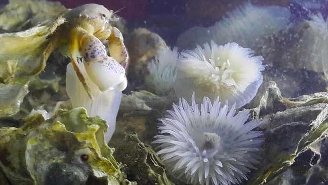 O recife também é moradia para outras espécies, como peixes
