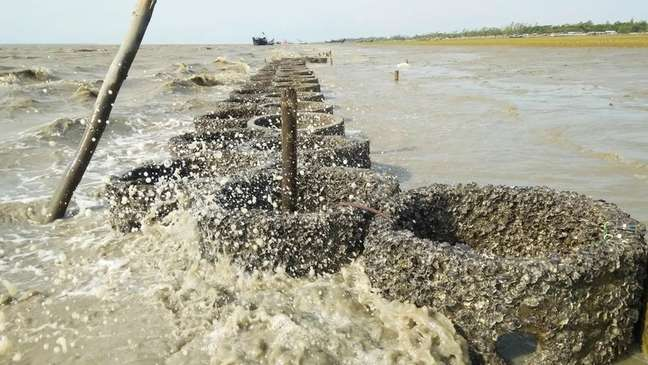 Recifes artificiais de ostras ajudam a diminuir o tamanho das ondas