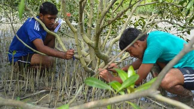 Os recifes ajudam na formação de mangues