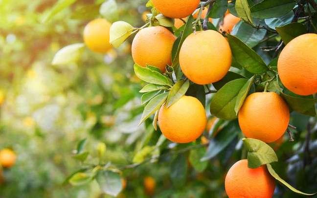 Veja como aproveitar todos os benefícios da laranja, que vão muito além da vitamina C - Shutterstock.