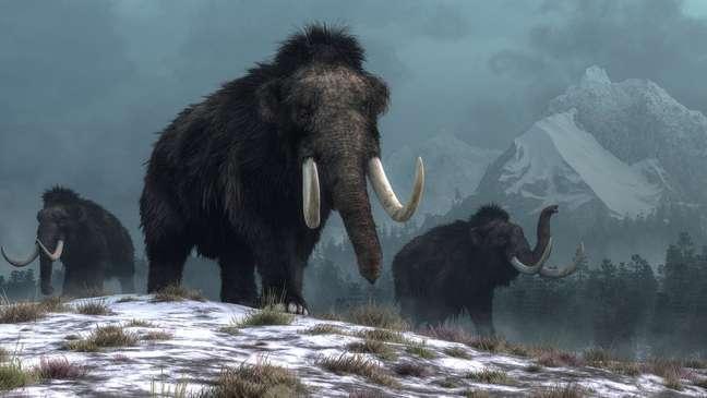 Para cientistas, mamutes tinham papel de manter pastagens e fertilizar o solo