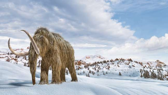 Os mamutes lanosos foram extintos há milênios, mas com a tecnologia de engenharia genética do século 21, cientistas querem trazê-lo de volta à Terra