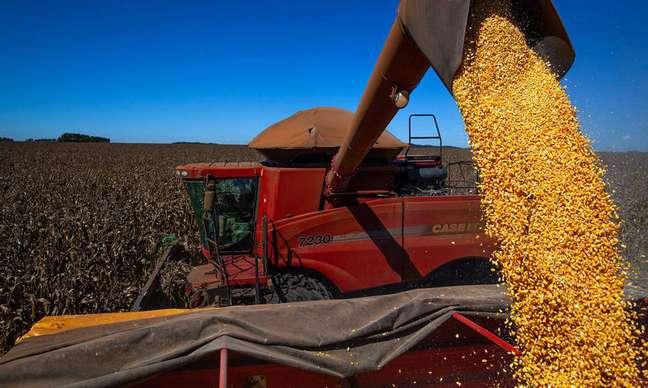 Safras menores de grãos podem elevar os custos com a alimentação do gadoe de outros animais, se traduzindo em preços mais altos para os consumidores que compram carne