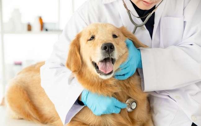 Os checkups são a melhor maneira de prevenir doenças do coração