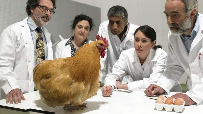 Não é a primeira vez que os cientistas tentam estabelecer a fórmula do ovo