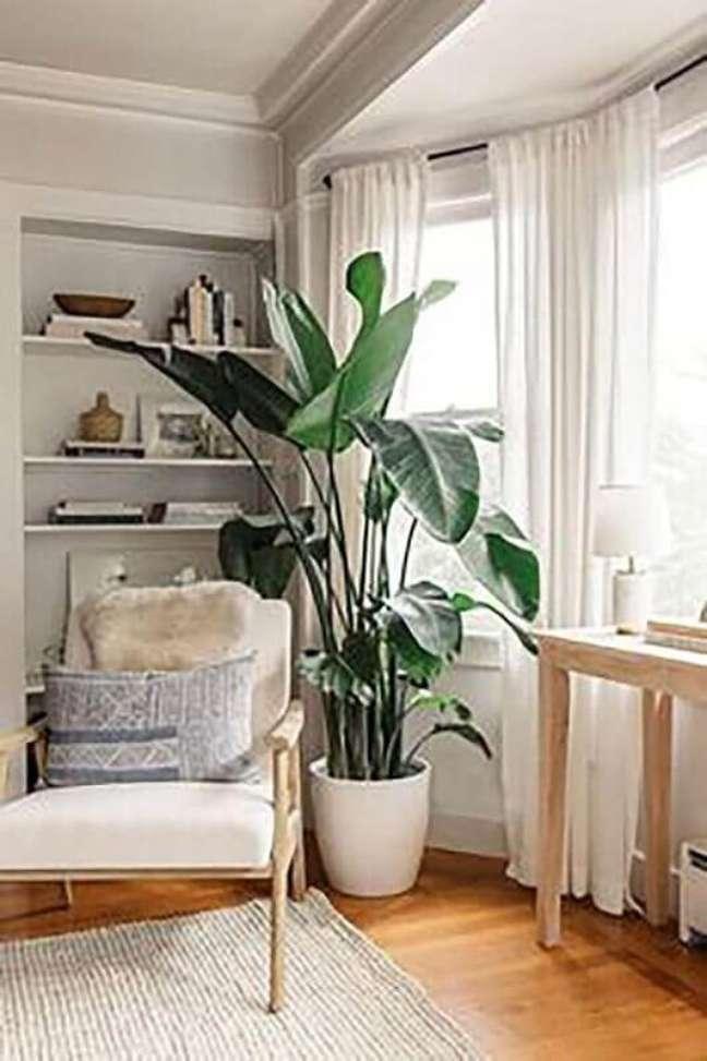 41. Vasos com plantas grandes para decoração de sala com poltrona de madeira – Foto: Rare Houseplants