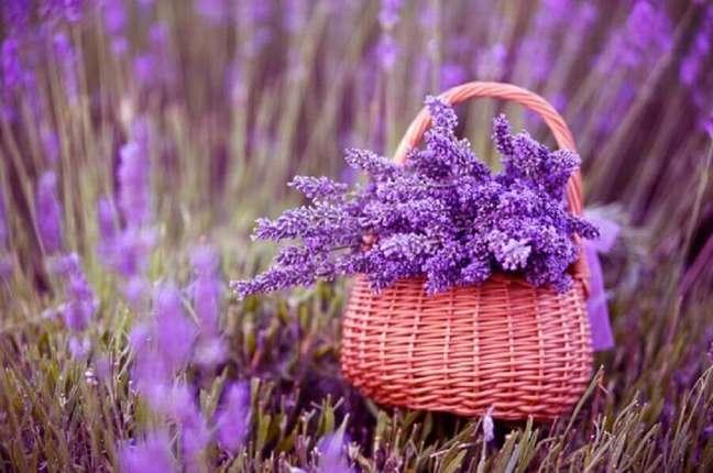 31. A fotos de plantas com lavandas sempre ficam lindas devido às cores vivas de azul e roxo – Foto Pixers
