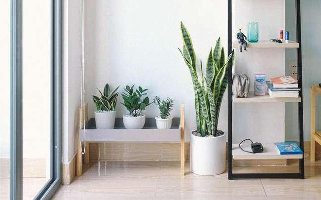 Essa planta tem uma forte ligação com o mundo místico - Huy Phan/Pexels