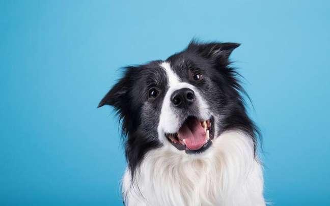 Descubra se a Lua do seu pet harmoniza com a sua - Shutterstock