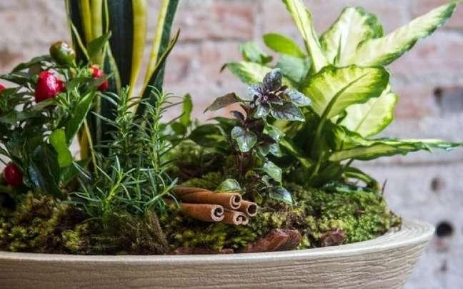 O vaso das sete ervas é um ótimo amuleto de proteção para sua casa - Edna Froes/Divulgação