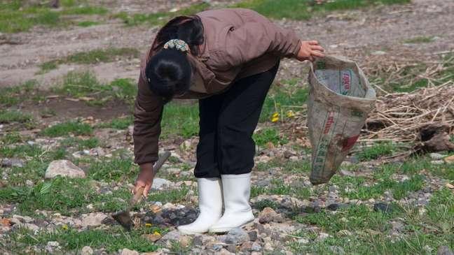 Grande fome matou milhares de norte-coreanos nos anos 90; país ainda enfrenta escassez de alimentos; na foto acima, mulher colhe grama para comer