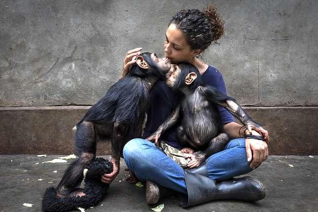 Chimpanzés com cuidadora