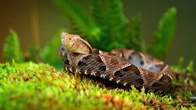 Fontes indicam que ela foi picada por uma Bothrops atrox, cujo nome em Trinidad é mapepire balsain. A cobra tem um veneno particularmente letal e de ação rápida
