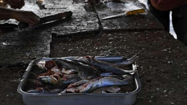 Poluição está afetando animais para consumo humano
