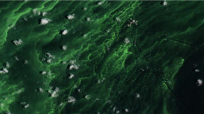 Cor verde reflete presença de algas