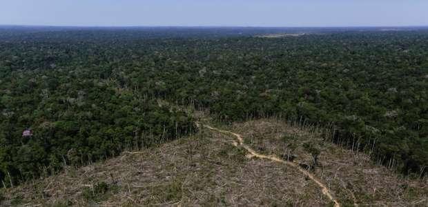 Desmatamento da Amazônia chega à maior marca da história
